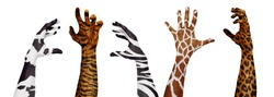 Wild animals skin on human hands. Concept of animal protection, attention to poachers, real skin fashion use. Idea of relation, friendship with animals. Design for posters, banners, advertisement