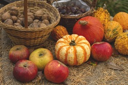 wild apples, pumpkins and nuts