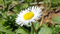 Wild Babounj, Flowers Fleurs Sauvages, Babounj naturel