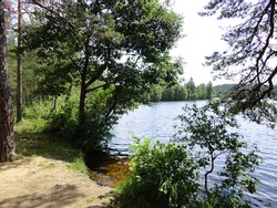 Wild beach by the lake. The forest surrounds a beautiful lake with clear water. Lake shore with a sandy edge. Trees and bushes grow on the shore. The branches lean towards the water itself.