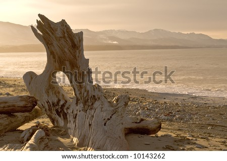 wild beach landscape with driftwood in Washington