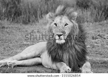 wild beast.... Kenyan safari    don't fear here  #1555026854