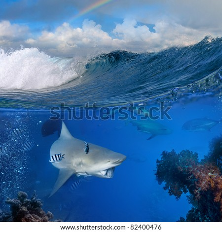 wild big bull-shark that holding piece of prey on mouth swimming over coral reef surrounded by fish in blue deep Top part is a cloudy tropical seascape with breaking surfing wave