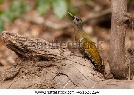 Wild bird #451628224