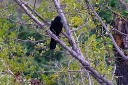 wild bird craw in forest