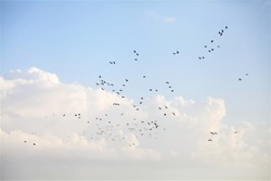 wild birds flying on the blue sky background,design for business work,for wallpaper and background concept.for text