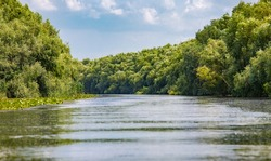 Wild birds paradise - River Danube in Romania - Delta, nature pure in a water world as seen from a boat.