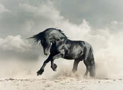 Wild black stallion in desert running