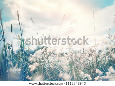Wild blossoming grass in field meadow in nature on background sky with clouds, defocused, close-up. Beautiful summer nature landscape in vintage pastel colors, copy space.