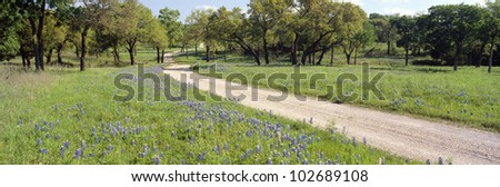 Wild Blue Bonnets, Spring in Rural Texas