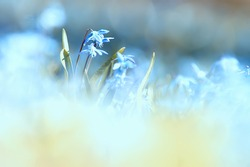 wild blue spring flowers, wildflowers small flowers, blurred abstract background many flowers