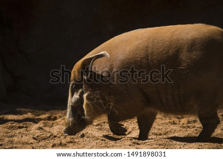 Wild boars. Wild animal in its habitat.