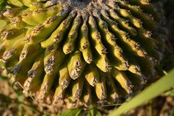 Wild cactus growing on the street
