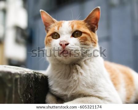 wild cat #605321174