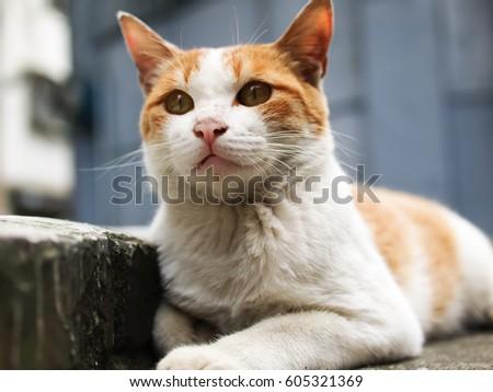 wild cat #605321369