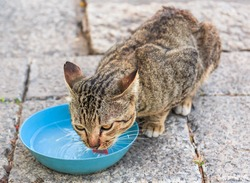 wild cat drink water in nature background