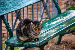 Wild Cat on a Bench Taking a rest