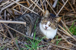 Wild cat sits in dry grass in Fremont Central Park