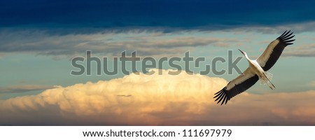 wild colorful bird in sunny day, nature series
