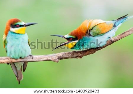 wild colorful birds in conflict #1403920493