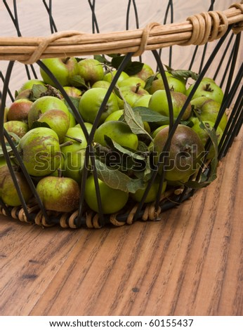 Wild Crab Apples in basket after being harvested from the hedgerow.