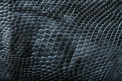 wild crocodile skin pattern in many style.