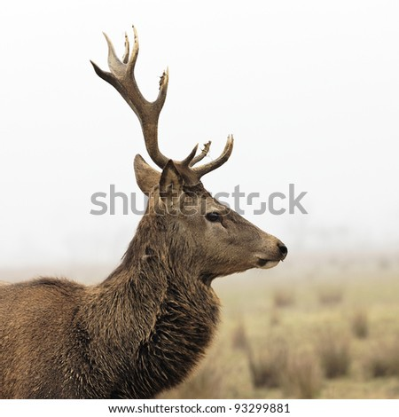 wild deer in forest with morning fog in winter
