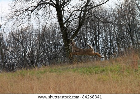 Wild deer jumping in the woods and is completely off the ground