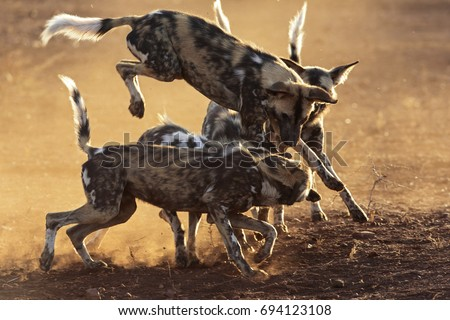 Wild Dog Game