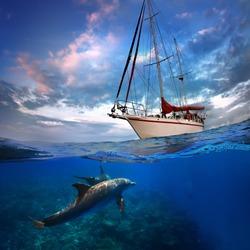 Wild doplhins swimming under yacht