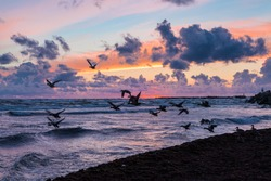 Wild ducks fly up from the Baltic sea coast while stormy weather at beautiful cloudy sunset