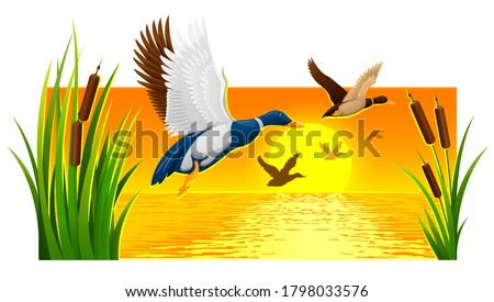 Wild ducks soaring from reeds on lake with bright sun and sunset sky with reflections ripple water at background. Nature evening landscape banner. 3D illustration. Stockfoto ©