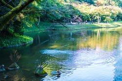 Wild ducks swimming in water and standing on rocks in a pond in Japanese garden (Koishikawa Korakuen, Tokyo, Japan)