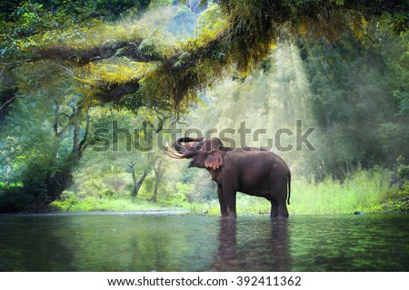 Wild elephant in the beautiful forest at Kanchanaburi province in Thailand, (with clipping path) #392411362