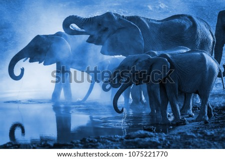 Wild elephants drinking water, detail of mammals in the jungle, nature #1075221770