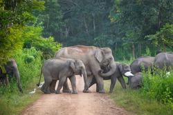 Wild elephants family from Kui Buri National Park
