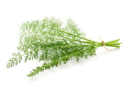 Wild fennel bunch isolated on white background