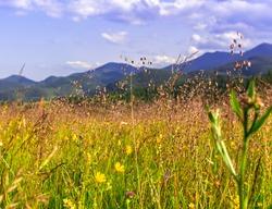 Wild field in Carpathians, summer background.