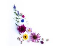 Wild Flower Composition