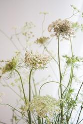 Wild flower. Field flower. White and green flower