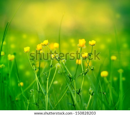 Wild flower - Yellow flowers