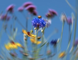 Wild flowers against a clear blue sky, with radial motion blur in the background.