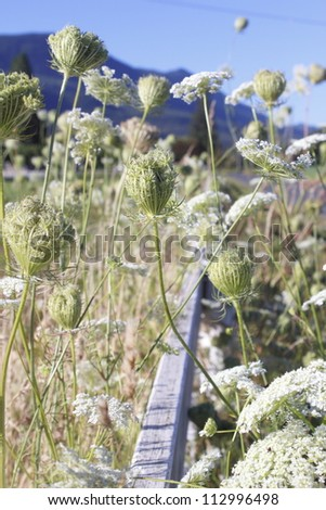 Wild flowers along a fence/Wild Bloom and Flowers/Wild plants grow along an old rural fence