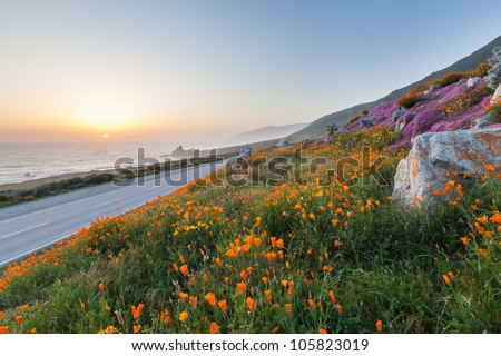 wild flowers and California coast in Big Sur