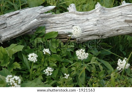 wild flowers and deadwood