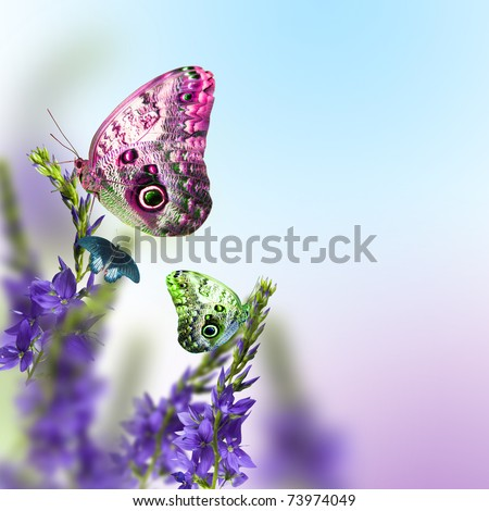 wild flowers blue blooming with butterfly
