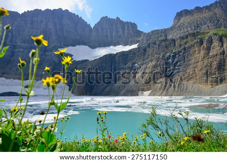 wild flowers by Grinnell glacier in Many Glaciers, Glacier National Park, Montana in summer
