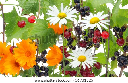 Wild flowers, cherry and currant a summer mix.