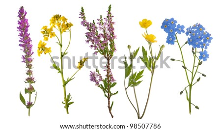 wild flowers collection isolated on white background - stock photo