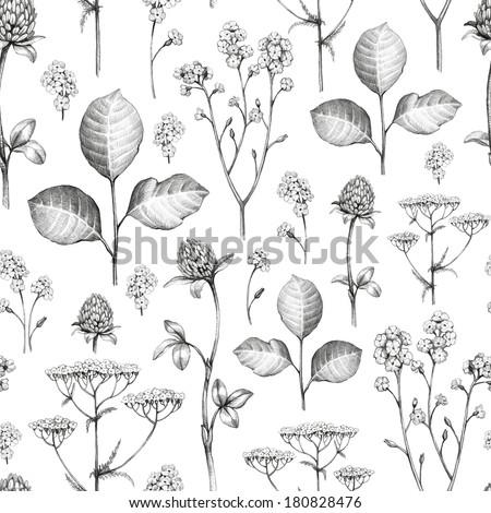 Multiple Flower Drawings Wild Flowers Drawing